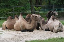 Chorzów Atrakcja Zoo Śląski Ogród Zoologiczny